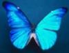x_butterfly19_x: (Blue butterfly)