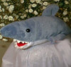 arduinna: a stuffed shark on a pillow, looking very fierce indeed (beanieshark)