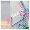 sid: (pretty Fence and flowers)