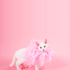 chatananas: stylish cat w a pink feathers boa (PINK: Cat boa)