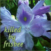 "epershand: A picture of a hyacinth with the text ""killed by frisbee"" (Ganymede)"