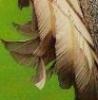 mergatrude: wings (wings)