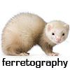 ferretography: (ferretography) (Default)
