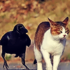 orm: a cat growing displeased with a crow (UGH: crow and cat)