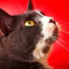 catness: (catstare)