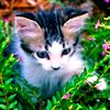 catness: (kittengrass)