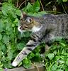 galenven: (кошка)
