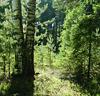 galenven: (солнечный лес)