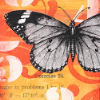 darwin: a black-and-white butterfly on an orangey red background (butterfly aflame)