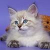 armizar: (Котёнок)