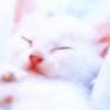 intimate_diary: (белый котенок)