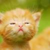 intimate_diary: (рыжий котенок)