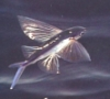 grumblerr: (flyfish)