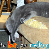 psghayleaux: a cat sliding off a couch with text reading to hot am melting (melting)