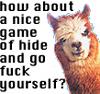 bluestareyed: Llamas are better than people (llama, gfy)