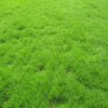 sasha_feather: Bright green grass (green grass)