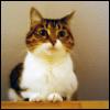aikea_guinea: (Cats - Annie - Cabinets)