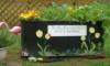 dreamflower: (my garden)