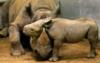 marianna_krim: (nosorog)