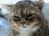 alena_15: (кот)
