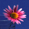 looktowindow7: (flower)