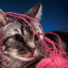 theodosia21: kitten with pink yarn (kitten with pink yarn)