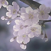 ptisa_jill: (spring)