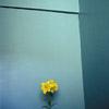 tacpoint: (цвет)