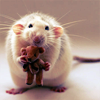 chatona: (misc: mr rat needs a hug)