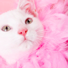 chatananas: cat wearing a pink boa (PINK: Cat boa closeup)