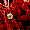idek: A microscopic image of a blood clot. (Misc → blood cells)