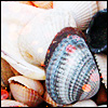 angryoldhag: A picture of shells (Shells)