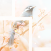 lifeingeneral: Bird in a Cherry Tree (Default)
