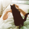 powderedplum: (Critters > Cat > Visitor)