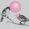 powderedplum: (Critters > Birds > Bubblegum)