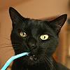powderedplum: (Critters > Cat > Say whut?)
