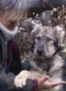 a_passer_by: My dog Irish ()