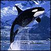 boycottseaworld: (BOYCOTT SeaWorld)