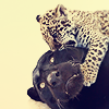 orm: a mother jaguar suffering chewing at the jaws of her young (OM NOM NAUGH: jaguars)