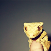 orm: a skeptical-looking lizard perched on somebody's finger (TINY AND WEE: skeptical gecko)
