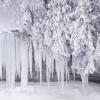 dragonhand: (frozen trees)