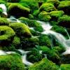 dragonhand: (moss creek)