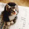 trojanwhores: (Kittens can't read the news)