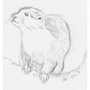 h_melville: (Otter)