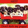 monique_27: (_ - Don't Kick My Puppy)