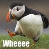 poshcat: (Wheee)