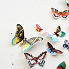 vegetasbubble: (Butterflies)