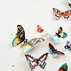 vegetasbubble: (Butterflies)