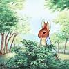 justchien: Peter Rabbit in some bushes. (peter rabbit)