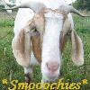 capra_maritimus: (Goat kiss)